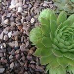 Stones4Homes Horticultural Grit