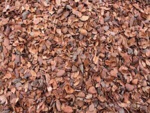 cocoa-shell-mulch